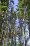 老森林增长 免版税库存照片