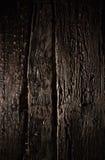 老森林 免版税库存图片