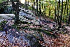 老森林trees_2根  免版税库存图片
