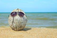 老椰子lounging在海滩 库存图片