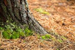 老概略的树褐色自然木抽象背景 免版税图库摄影