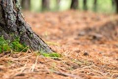 老概略的树褐色自然木抽象背景 库存图片