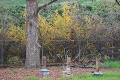 老橙色树丛加热器和石榴灌木 免版税库存图片