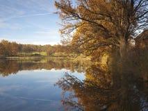 老橡木反映在秋天的水中 库存照片