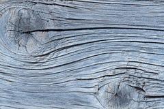 老橡木背景 库存照片