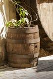 老橡木葡萄酒桶。 免版税库存图片