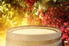 老橡木葡萄酒桶的图象在酒围场风景前面的 有用为产品显示蒙太奇 免版税库存图片