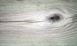老橡木 免版税库存照片