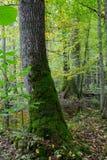 老橡树和水在秋天森林里 图库摄影