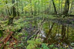 老橡树和水在秋天森林里 库存照片
