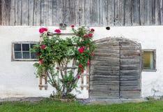 老毂仓大门和红色玫瑰丛 免版税库存照片