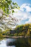 老池塘在森林区域 库存图片
