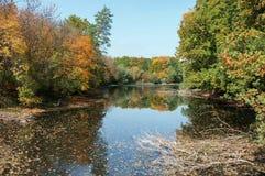 老池塘在森林区域 图库摄影