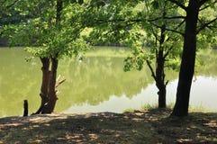 老池塘在森林区域 免版税库存照片