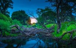 老河床充满树 免版税库存图片
