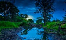 老河床充满树 库存照片