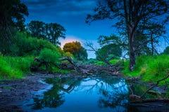 老河床充满树 免版税图库摄影