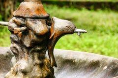 老海豚轻拍用落一下落的水显示水危机  除水之外 免版税库存图片