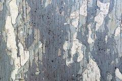 老深灰木墙壁纹理有裂化的白色油漆的 图库摄影