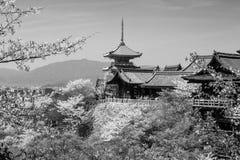 老清水寺寺庙和樱花在京都 库存照片