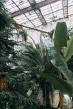 老温室,欧洲风格的 库存照片