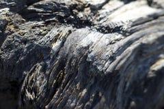 老漂流木头难看的东西纹理 图库摄影