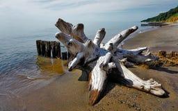 老漂移的树桩 免版税图库摄影