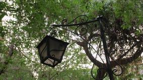 老灯笼在公园 影视素材