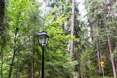 老灯笼在森林里 免版税库存照片