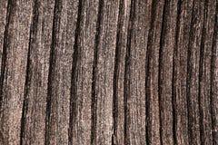 老灰色木板条详细的纹理 库存照片