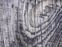 老灰色木板纹理日落天 库存照片