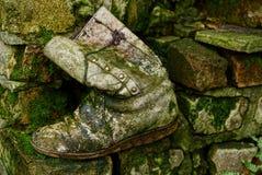 老灰色起动长满与在泥的青苔在岩石 图库摄影