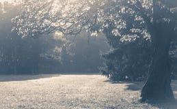 老照片葡萄酒 一棵树的沼地分支与叶子阳光的 免版税库存图片
