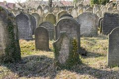 老犹太公墓在Horice镇非常大和保存良好 免版税图库摄影