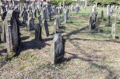 老犹太公墓在Horice镇非常大和保存良好 免版税库存照片