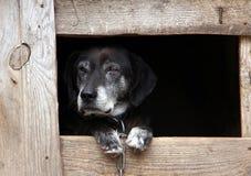 老狗在狗窝 免版税库存照片
