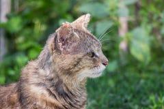 老猫在以绿色为背景的庭院,特写镜头里 免版税库存图片