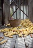 老玉米烘干机 免版税库存图片