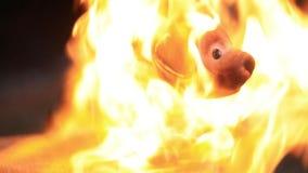 老玩具狗熔化在火下热的火焰  慢的行动 股票录像