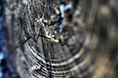 老环形构造结构树木头 免版税图库摄影