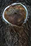 老环形构造结构树木头 库存图片