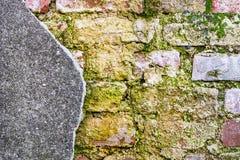 老生苔砖墙 库存图片