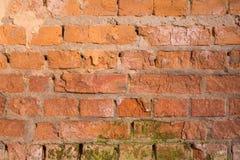 老生苔砖墙 免版税库存图片