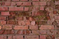 老生苔砖墙 免版税图库摄影