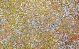 老生锈的金属片纹理背景,与地衣和青苔 库存图片