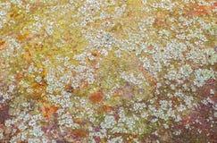 老生锈的金属片纹理背景,与地衣和青苔 图库摄影