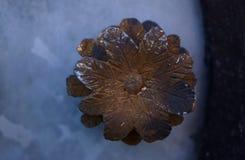 老生锈的铜花 免版税库存照片