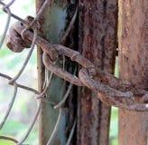 老生锈的链子作为在一个老门的一把锁 免版税库存照片