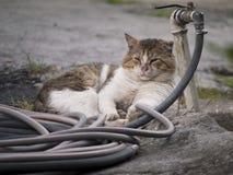 老疲乏的猫在庭院里 库存图片