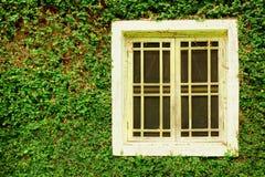 老白色木窗口和常春藤绿色叶子报道了墙壁背景 免版税库存照片